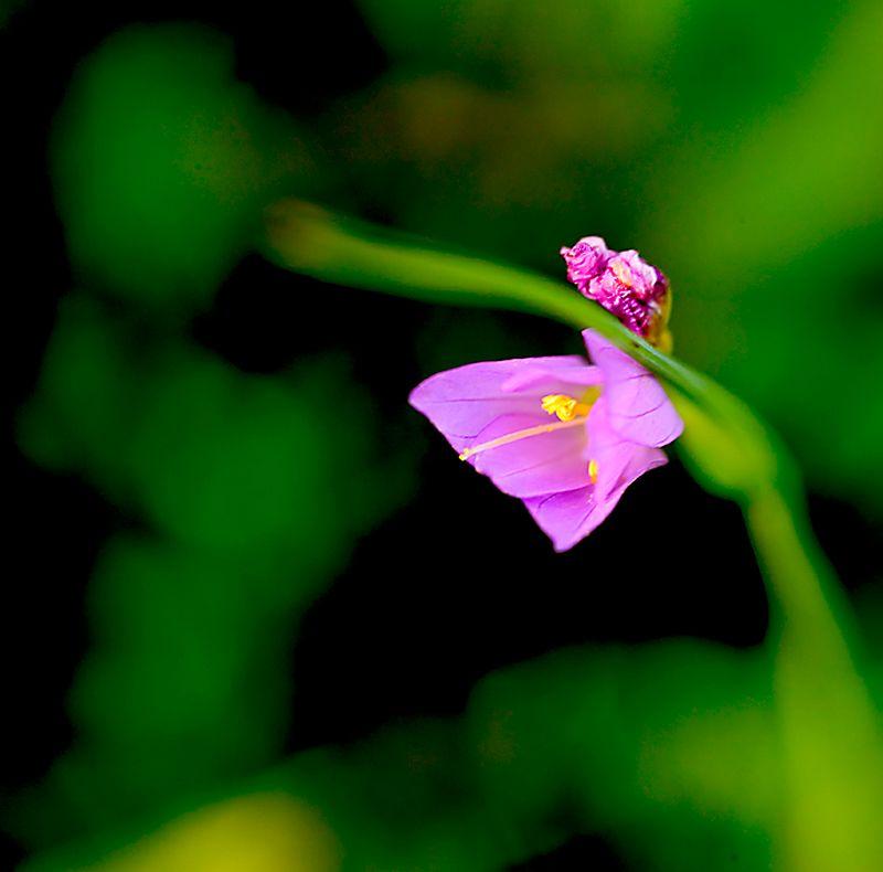 076_05 05 27_Big Summit Prairie  wildflowers
