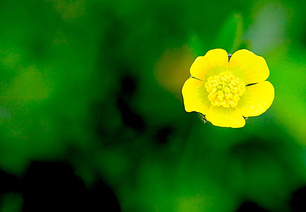 074_05 05 27_Big Summit Prairie  wildflowers 2