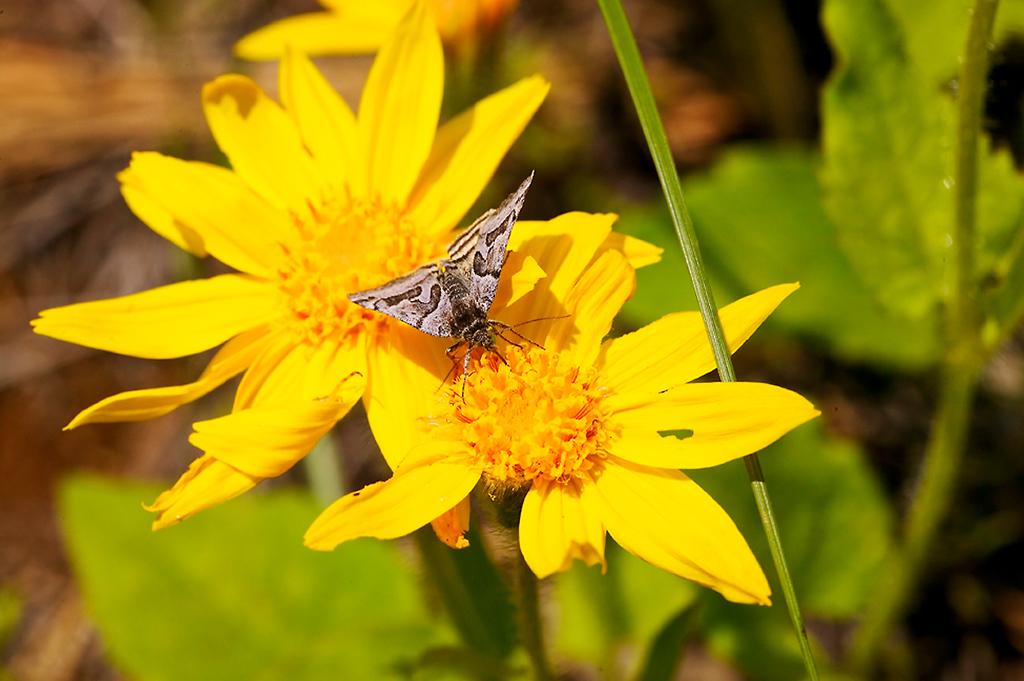 021_05 05 27_Big Summit Prairie  wildflowers