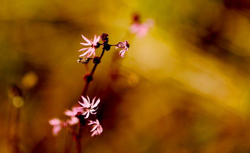 042_05 05 27_Big Summit Prairie  wildflowers