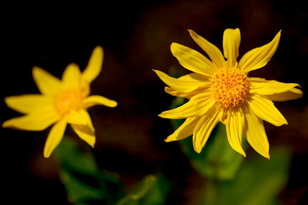 033_05 05 27_Big Summit Prairie  wildflowers