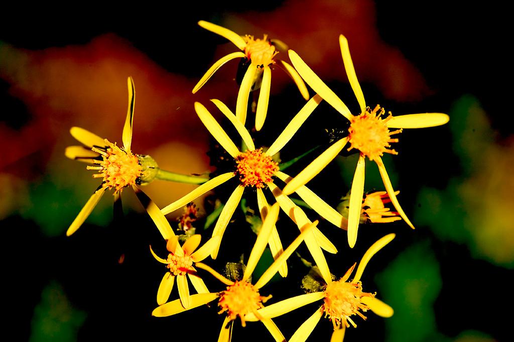 078_05 05 27_Big Summit Prairie  wildflowers