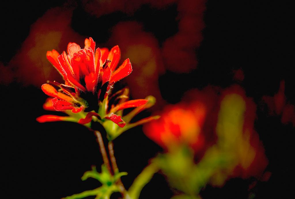 104_05 05 27_Big Summit Prairie  wildflowers
