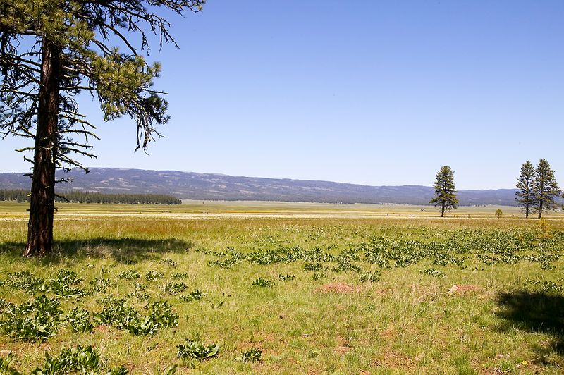 005_05 05 27_Big Summit Prairie  wildflowers