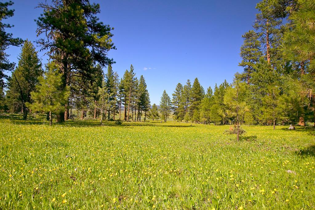 064_05 05 27_Big Summit Prairie  wildflowers