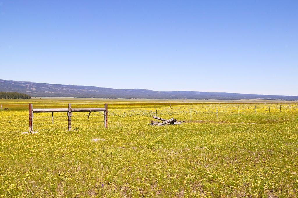 000_05 05 27_Big Summit Prairie  wildflowers