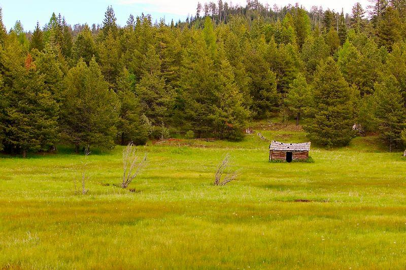 098_05 05 27_Big Summit Prairie  wildflowers