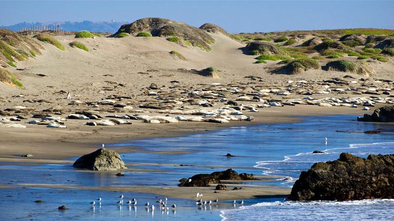 Elephant Seals, San Simeon, CA.