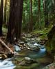 Redwoods, Big Sur, Limekiln State Park, Monterey County
