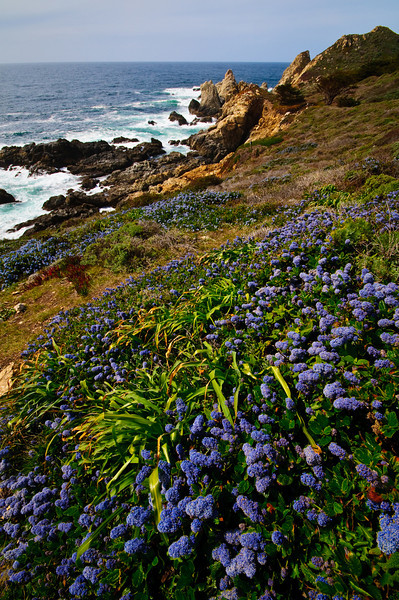 Big Sur Vertical Wildflowers and coastline DSC1613