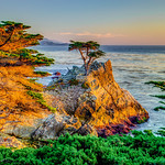 Lone Cypress at Sunset - D3S3503