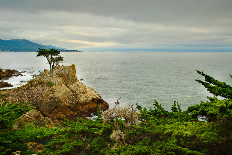 Lone Cypress at Pebble Beach, Carmel by the Bay.