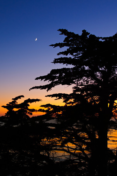 Cypress_and_Moon_Carmel_17_Mile_Drive_Monterey_California_D3S366_PRINT_Vertical