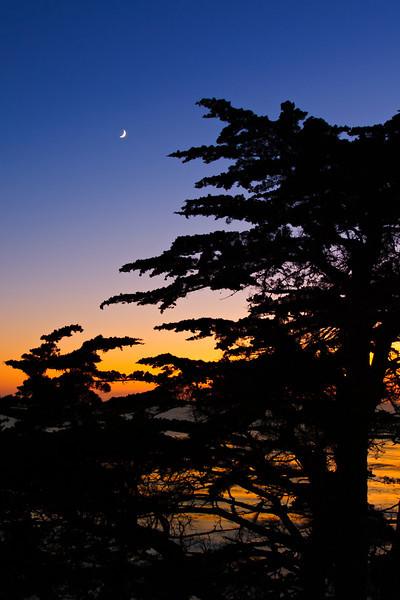 Cypress_and_Moon_Carmel_17_Mile_Drive_Monterey_California_D3S366_PRINT_Vertical