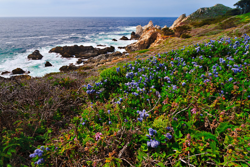 Big Sur Coastline and Wildflowers