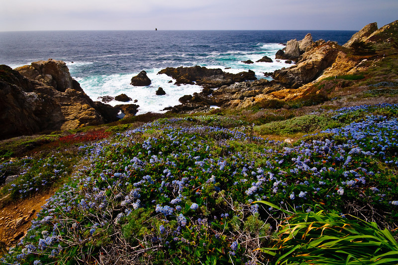 Big Sur Coastline and Wildflowers 2