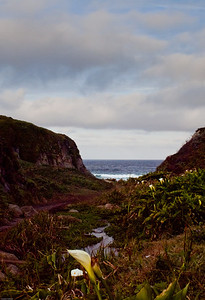 Calla Lilly cove at Garrapata Beach