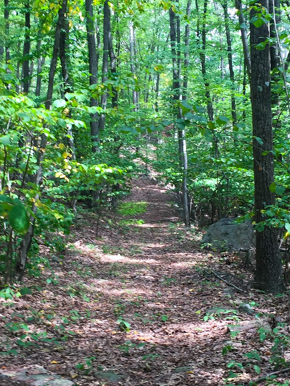 The trail leading to the caves.