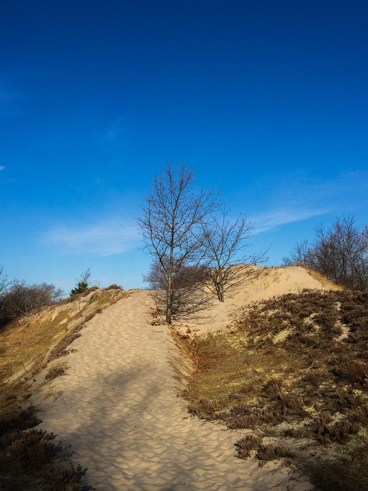 Crane Beach Dune Trails
