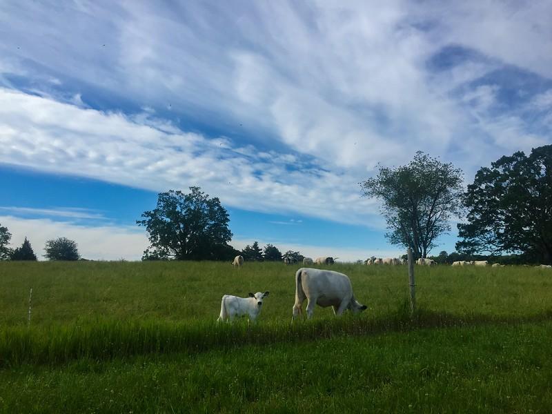 Appleton Farms