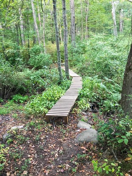 Norwood Pond Woods