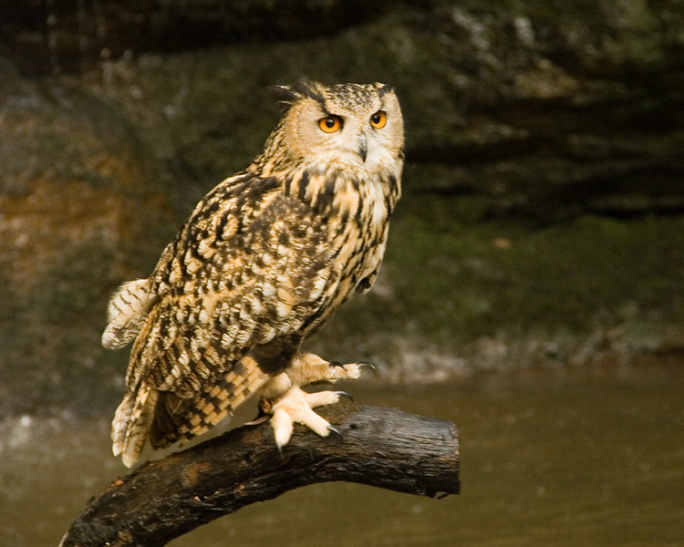 My birthday day out alongside and learning from wildlife photographer Alan Hewitt http://alanhewittphotography.co.uk/