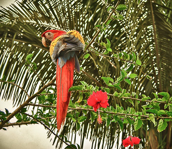 Scarlett Macaw and Flowers
