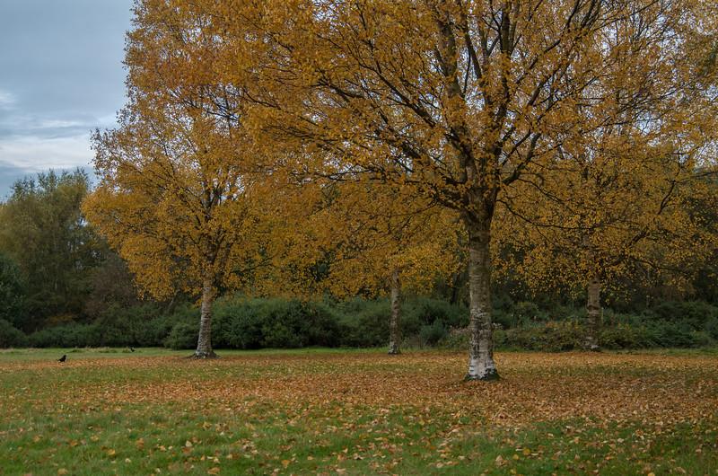 An autumnal Sutton Park