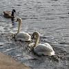 Wildlife in Sutton Park