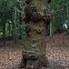 The tree with a face