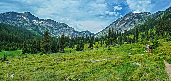 """High Mountain Meadow"""