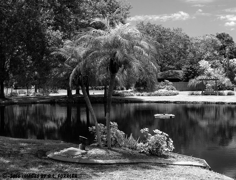 A Palm and Pond