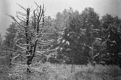 First Snow - Marlow, New Hampshire,  Ilford Delta 400 in microphen