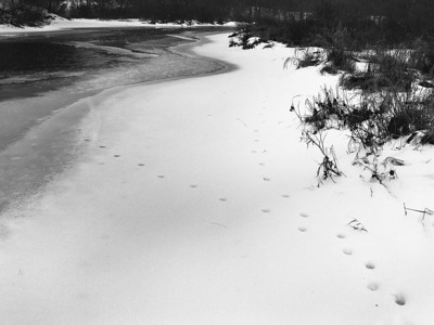 Winter Tracks - Marlow, New Hampshire, P645N, Ilford HP5+, D76