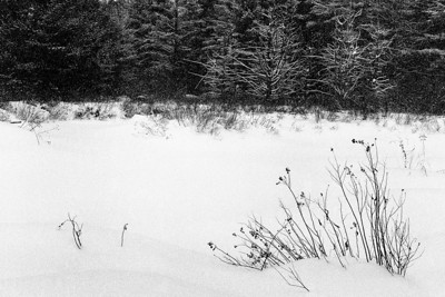 Bleak Winter - Marlow, New Hampshire Ilford Delta 3200, D-76, P645N