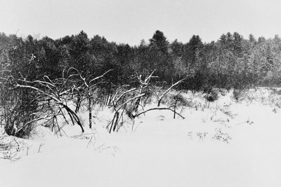 Bleak Winter II - Marlow, New Hampshire lford Delta 3200, D-76, P645N