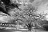 Utah, Canyonlands, Moab Black White Landscape Art, 犹他,  峡谷地国家公园 黑白摄影, 风景