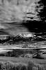 Canadian, Jasper National Park, Landscape, 加拿大 贾斯珀国家公园 黑白摄影, 风景