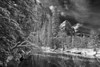 California, Yosemite National Park, Winter, Snow Black White Landscape Art 加利福尼亚 优胜美地国家公园 冬 黑白摄影, 风景
