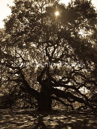 Angel Oak - Johns Island, SC