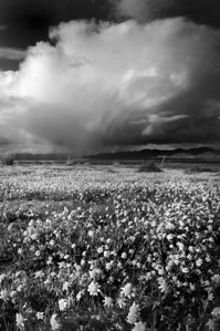Storm Cloud and Flowers  Carizzo Plain National Monument