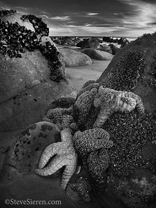 Rock Climbing Starfish Central California Coast