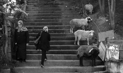 Sheep Tale