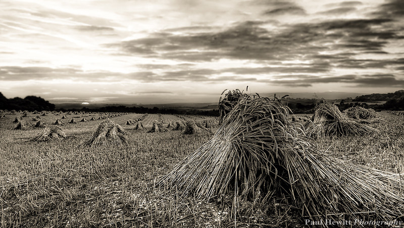 Stooks at King's Somborne, Hampshire 1