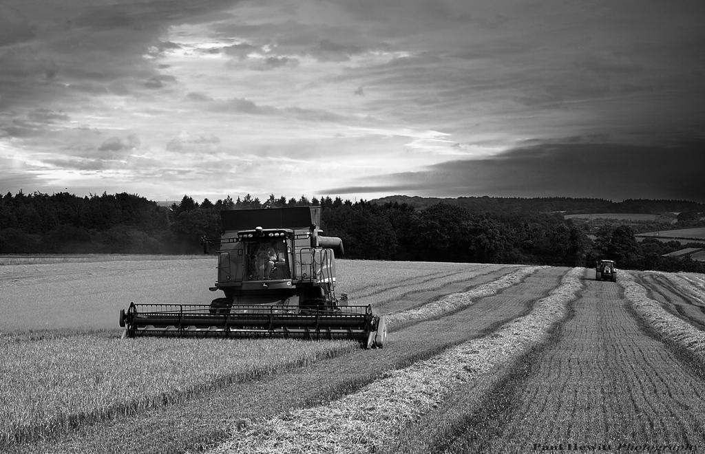 Harvest 1<br /> Charity Down, Longstock . Hampshire