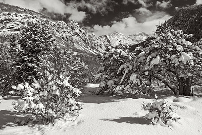 bw14:  Fresh snow in Bell's Canyon, Wasatch Mountains