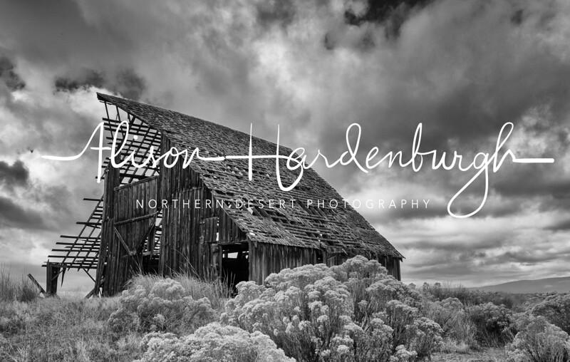 Old Barn, Northern California