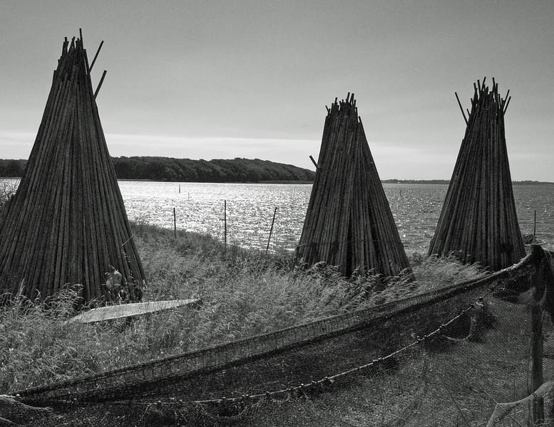 Bundgarnspæle - Fishing Stakes.<br /> Basnæs, Dybsø Fjord, Denmark.