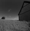Barn and Tree.<br />  Hotte Allé, Bregentved.