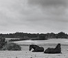 Awaiting Storm.<br /> Marker ved Lille Tvede. Denmark.